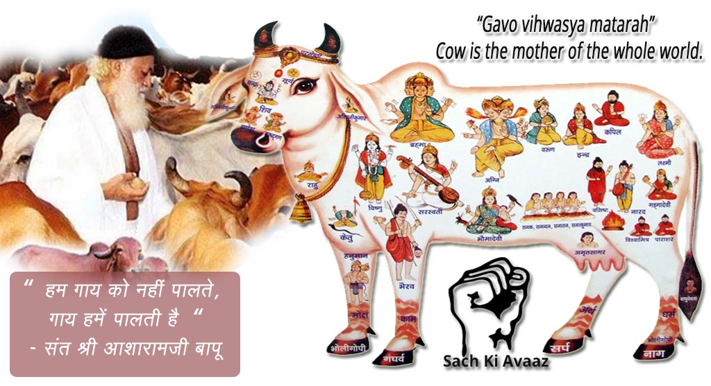 cow encyclopedia, slaughter houses , cow shelters,Niwai gau shalas
