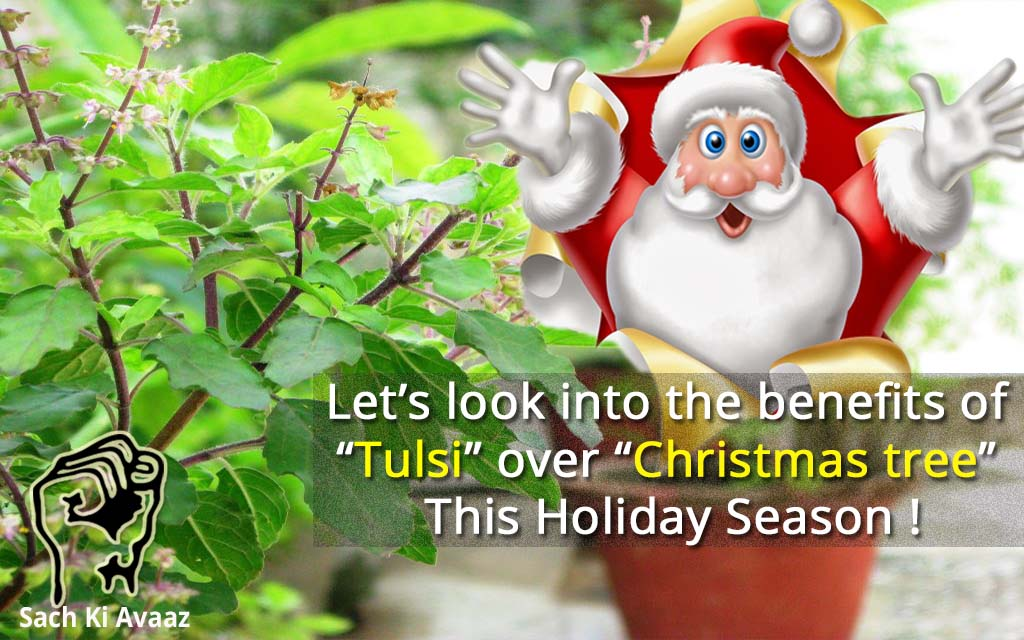 Harmful Christmas tree, benefits of Tulsi , tulsi medicinal benefit