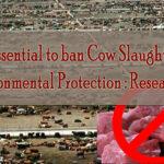 save environment, Beef ban